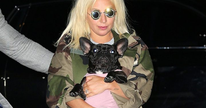 A dog's handler killed Lady Gaga and stole two animals