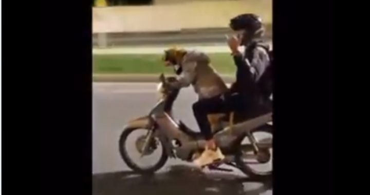 Dog hit to ride a motorbike on Colombian streets