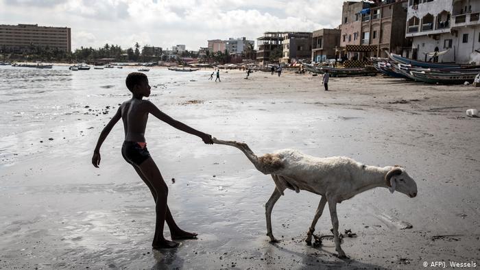A boy in Senegal pulls the leg of a sheep