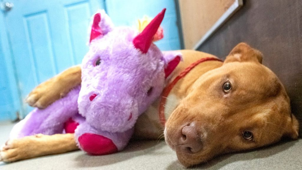 The puppy steals the purple rhino five times and the authorities buy it from him - Uno TV
