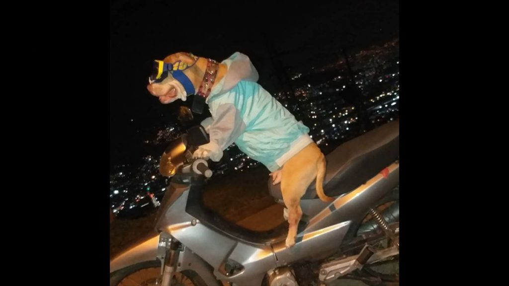 """""""Natasha,"""" the dog that quickly went out to drive a motorcycle"""
