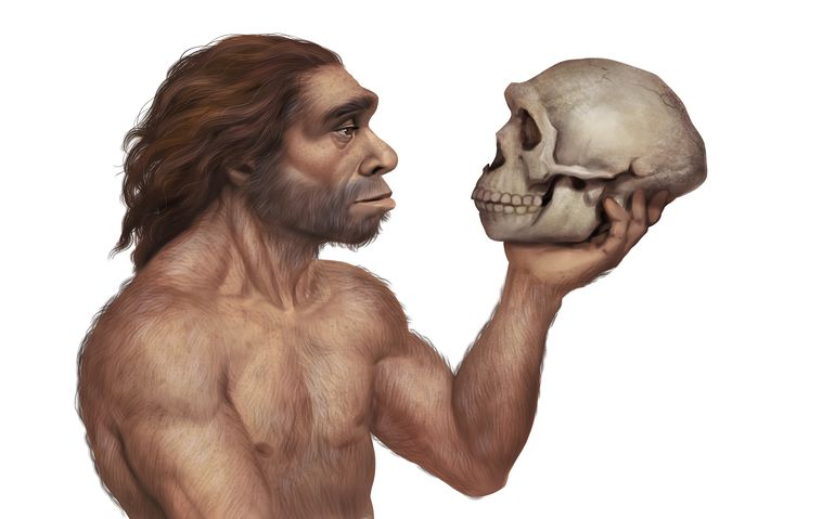 Neanderthals as well as Homo sapiens have been heard, according to the study - Science
