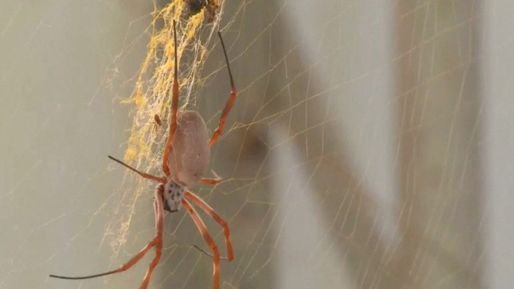 Music made by spiders.  Experts recreate sound from cobwebs