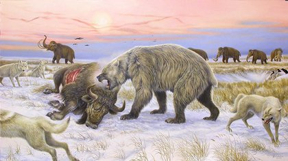 A giant short-faced bear eating bison in the Pleistocene tundra scene: Credit: Ronaldino and Grant Zazula, Yukon Beringia Interpretive Center