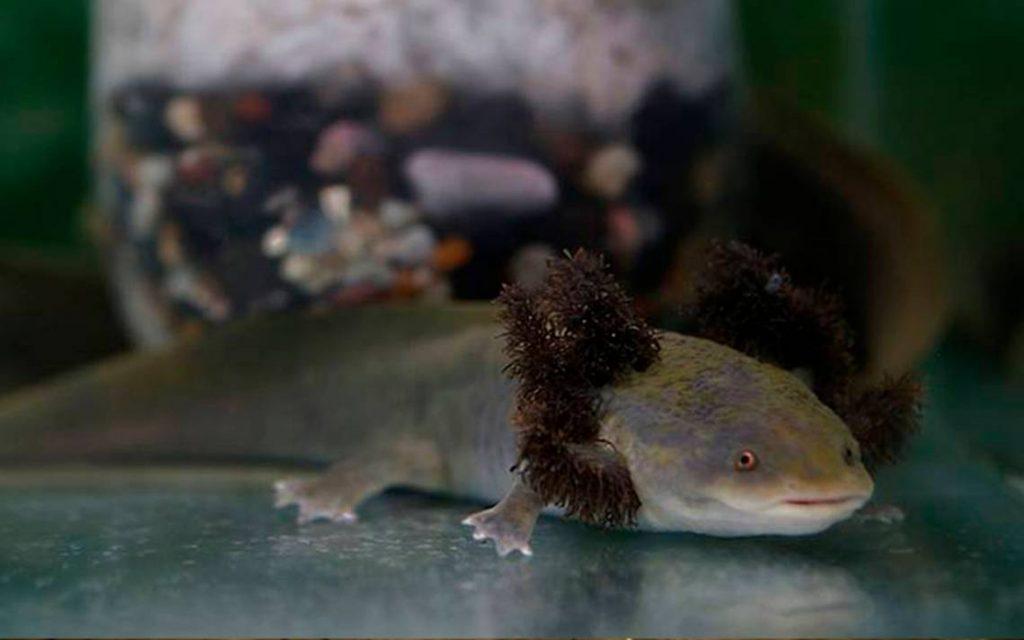 Science: Talaconite and frogs in danger - El Sol de Orizaba
