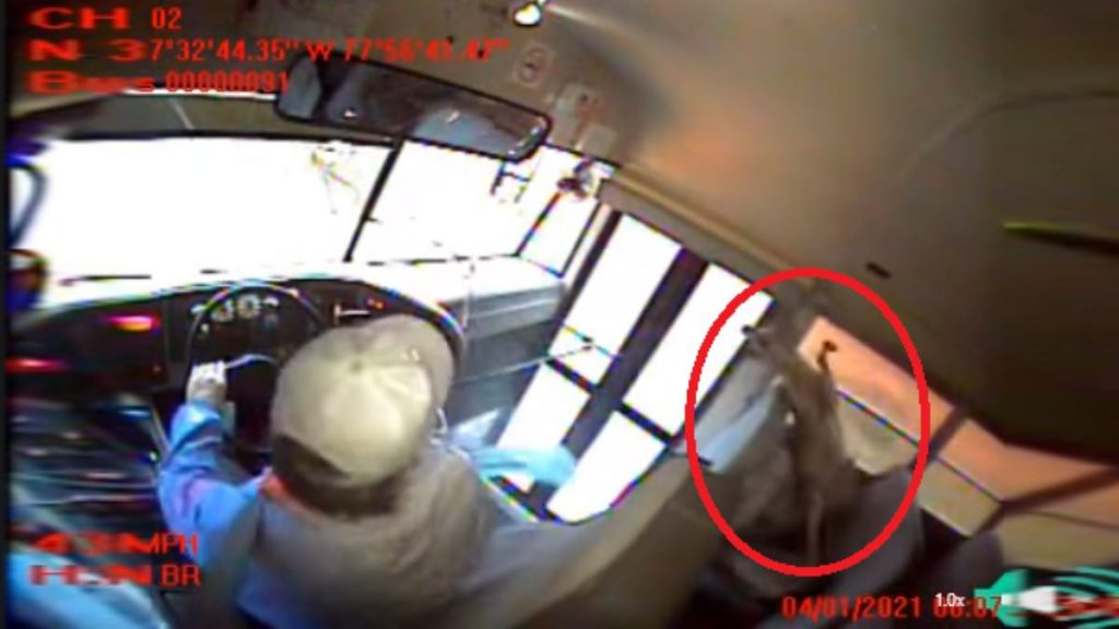 The deer collides with the school bus and falls on the sleeping student