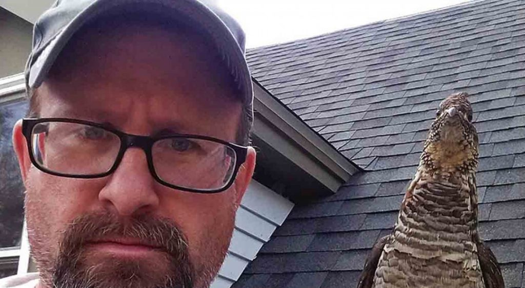 Todd, the guy who befriended a wild bird and they are already viral