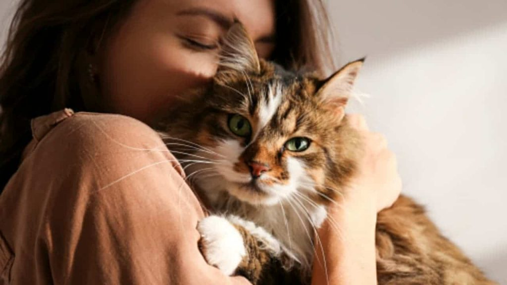 Cats: the relationship with their owners is divided into 5 categories
