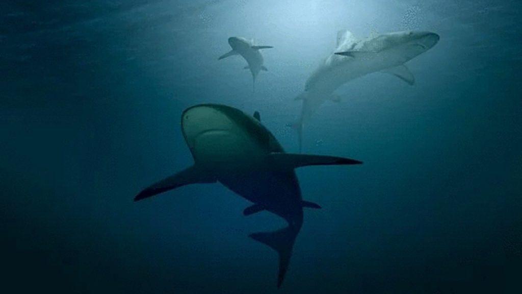 Ocean warming threatens shark demise