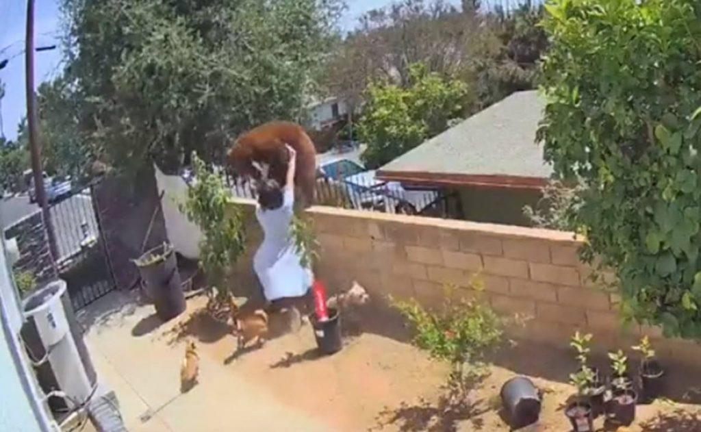 Joven de 17 años se enfrenta a un oso por sus perros en California