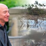 The Jeff Bezos Foundation works to restore the country's mangroves – El Financiero