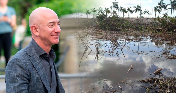 The Jeff Bezos Foundation works to restore the country's mangroves - El Financiero