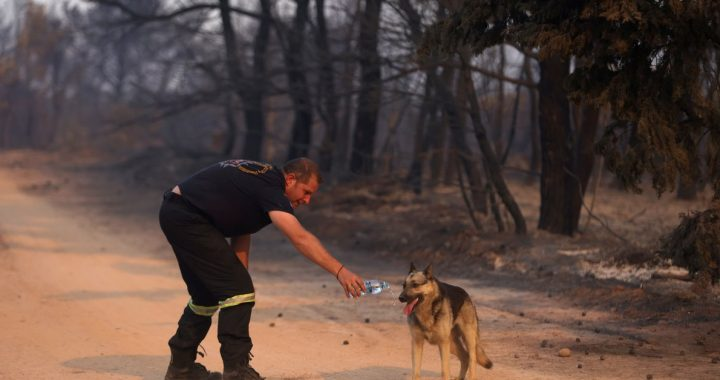 16 amazing photos of the devastating fire in Greece