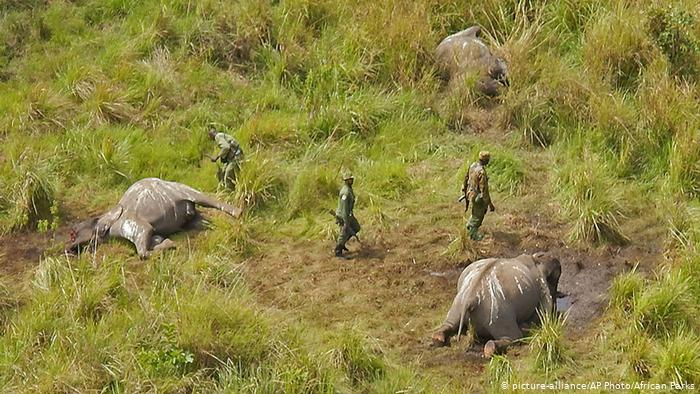 Afrika Kongo Wilderei Tote Elefanten (picture-alliance / AP Photo / African Parks)