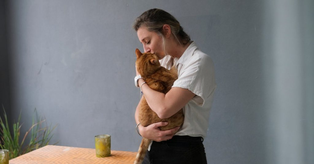 Cat notes: 5 essential keys to knowing more about your cat