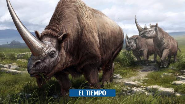 Geneticists trace the rhino family tree