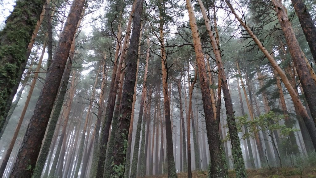 Reforestation could be more effective than previously thought in the fight against climate change