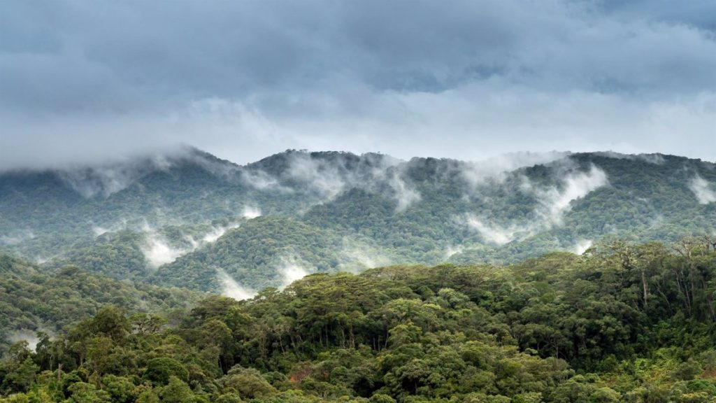 Reforestation could cool the planet more than thought