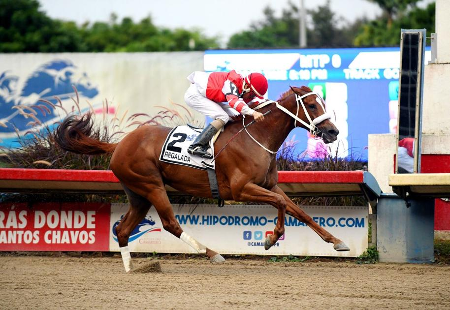 Regalada is the Horse of the Year 2020 |  Sports