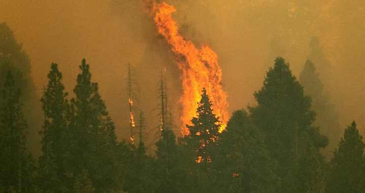 California wildfires: The world's largest tree has been wrapped in a blanket to protect it from the fire