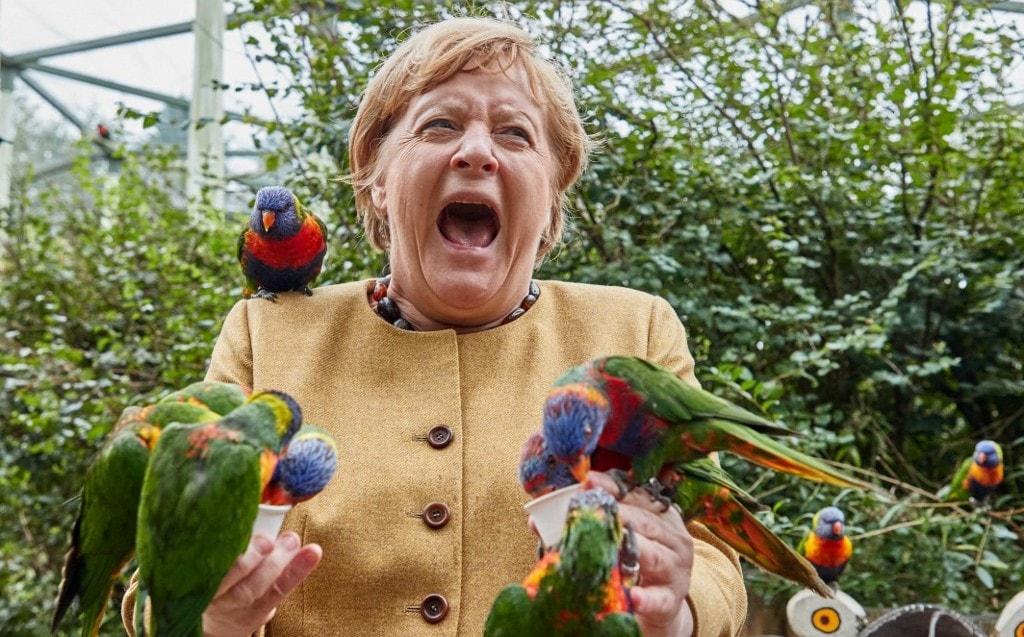 La canciller alemana, Angela Merkel, siento picoteada por un loro arcoíris en un refugio de aves al norte de Alemania. (AFP)