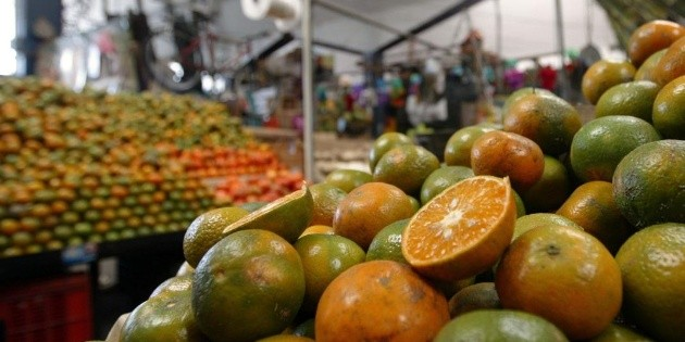 Mexico's citrus exports increased by 28.3% between January and July