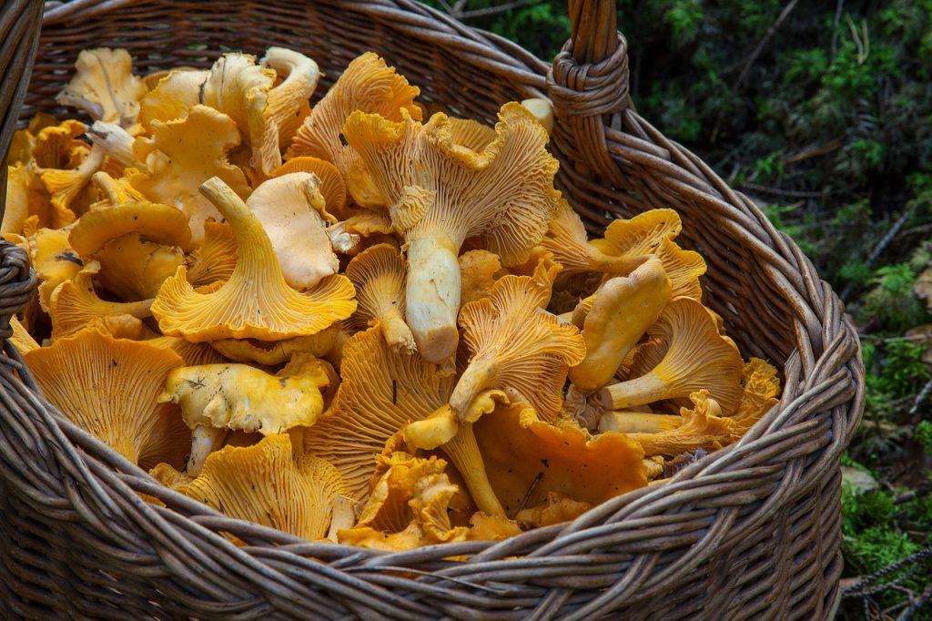 Mushrooms help fight depression