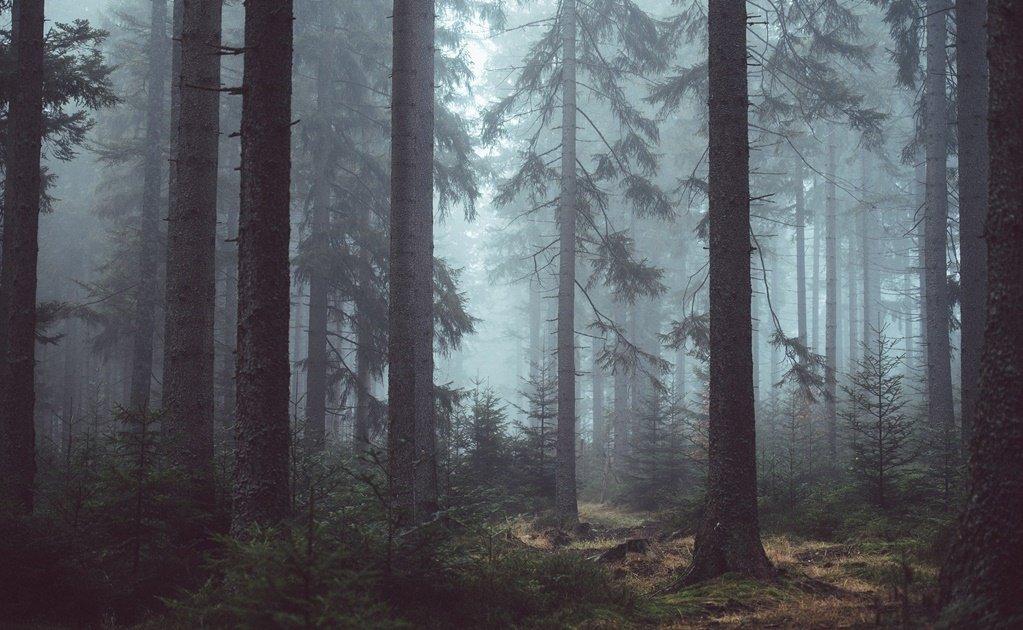 """¿A quién estamos buscando?, dice hombre """"desaparecido"""" que participo en su propia búsqueda"""